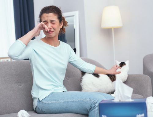 Why Are My Allergies Worse When I'm At Home?